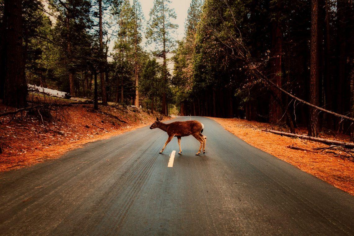 Seguridad_carretera